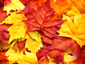 leaves Fall, Leaves, Trees and a Free Teacher Guide