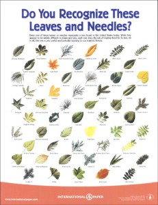 leaves poster 231x300 Fall, Leaves, Trees and a Free Teacher Guide