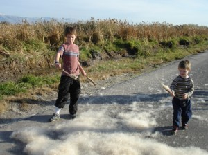 cattails 300x224 Part 1: Our Vacation is a School Trip   Science Classes