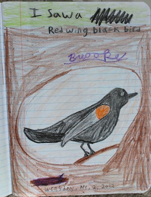 redwing blackbird homeschoolbytes Spring Homeschooling Bird Study Ideas