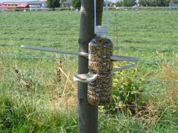 bird feeder More Fun Bird Ideas