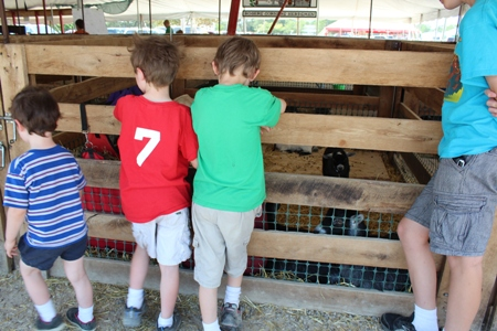 4H Fair homeschoolbytes Amazing Homeschool Adventures with 4H