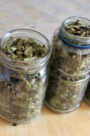 dehydrated green beans 2 homeschoolbytes Homeschool Lessons from the Garden