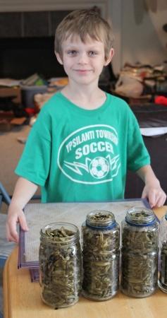 dehydrated green beans homeschoolbytes Homeschool Lessons from the Garden