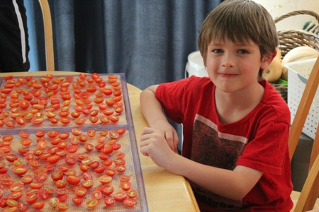 dehydrating tomatoes homeschoolbytes Homeschool Lessons from the Garden